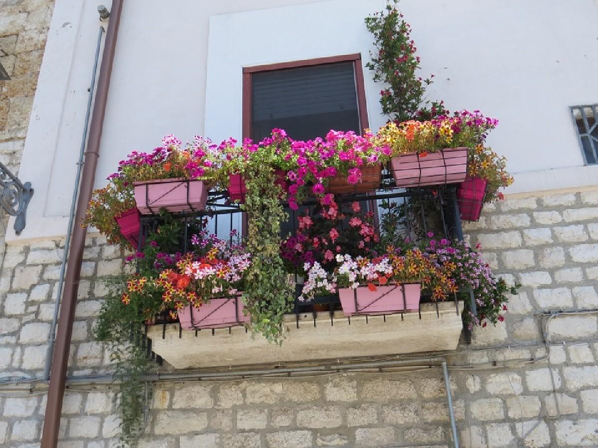 Ecco I Balconi Fioriti Più Belli Del Borgo Antico Di Bari