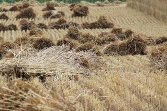 Sono una ventina i prodotti agricoli in crescita in Puglia