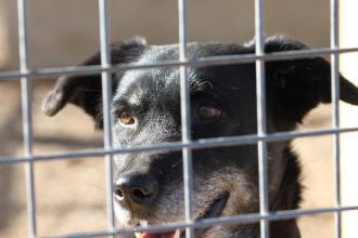 Randagismo ridotto con 40 cani adottati e tolti dai canili comunali