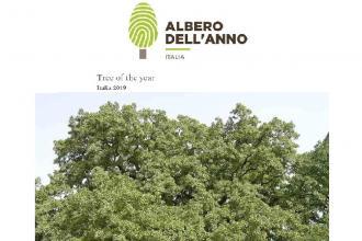 La Quercia Vallonea con i suoi 700 anni candidata ad Albero dell'anno