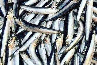 I pescatori possono vendere a domicilio