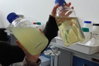 Il pacciamatore liquido e l'alga spirulina dalla Puglia a Milano