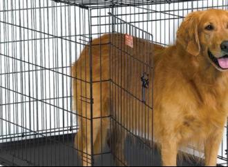 """Il progetto """"Zero cani in canile"""" continua a suscitare interesse"""