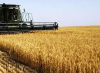 Una festa per celebrare il grano, ringraziare e rivivere le tradizioni