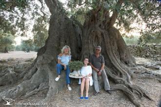 Gli ulivi millenari di Puglia protagonisti del premio a loro dedicato