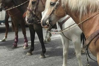 Sfilata di cavalli e prodotti tipici per la Fiera di San Vincenzo