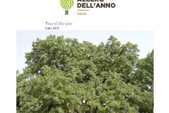 La Quercia Vallonea con i suoi 700 anni candidata ad Albero dell