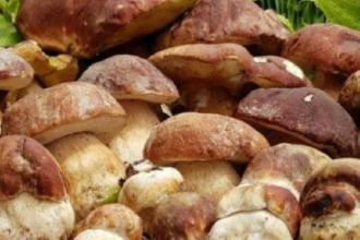 Funghi e sapori di bosco per una sagra con musica e visite guidate