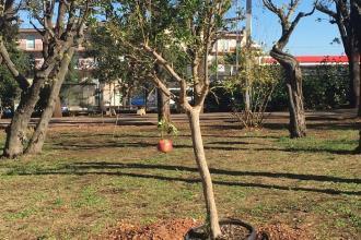 Città pugliesi pronte per la Giornata nazionale degli alberi