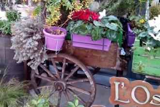 Coldiretti invita ad abbellire le case con piante e fiori per Pasqua