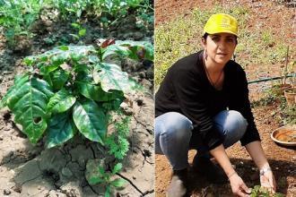 In Salento apicoltrice avvia piantagione di caffè