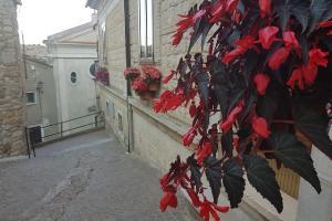 Il Comune lancia un itinerario dei fiori per i turisti