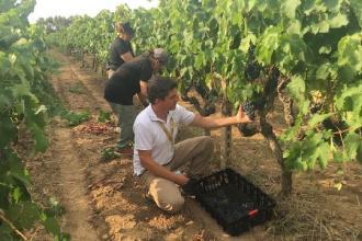 Il 2020 sarà l'annata del vino pugliese di qualità